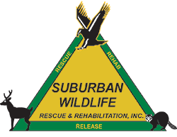 Suburban Wildlife Rescue and Rehabilitation on DonatecarUSA.com