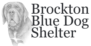 http://www.donatecarusa.com/wp-content/themes/donatecarUSA/assets/img/logos/bluedogshelter.png