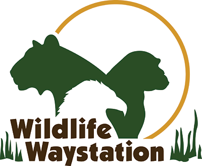Donate a car to Wildlife Waystation