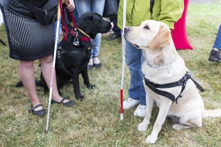 dogs for guiding the blind